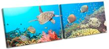 Sea Turtle Fish  Animals - 13-0896(00B)-MP14-LO
